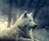 m_findlow: (Wolf)