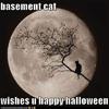 wren_kt7oz: (YYY_halloween basement cat)