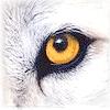 rhianon76: (WolfGaze)
