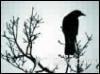 rhianon76: (Black)