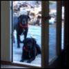 fionaniconnor: (Dogs.)