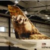 badger: (airplane)