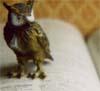 storyrainthejournal: (littleowl)