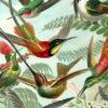 storyrainthejournal: (hummingbirds)