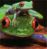 storyrainthejournal: (froggies)
