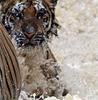 storyrainthejournal: (tiger)