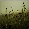 katieshope: (flowers)