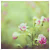 katieshope: (quiet flowers (pretty pixels))