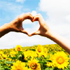 supercheesegirl: (heart - sunflowers)