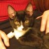 bk2w: (Kitten)