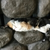 alhbooks: Cat sleeping in alcove over fire. (Default)