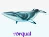 rorqual: (Default)