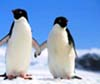 rorqual: (penguins)
