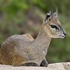 spin_kick_snap: (zzzklipspringer: Inquisitive, zzzklipspringer: Laying Down, zzzklipspringer: Default)