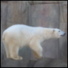 adelheid_p: (Polar Bear)