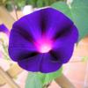 rosecathy: (Default)