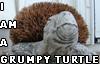 chezmax: (Grumpy Turtle)
