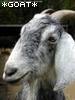 wickedflea: (*goat* 2)