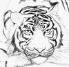 ellestra: (skye daisy johnson)