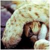 mashkis: (спать)