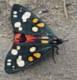 cyrix761: (бабочка)