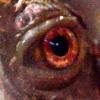 jodawi: (turtle eye)