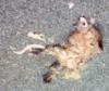 passionpop: (dead)