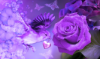 flowergirls93: (bird, flowers, purple, rose)