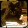 lil_1337: (Reading - Tori on books)