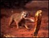 prong777: (мангуст и кобра)
