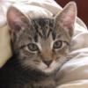 jezebelblue: (bigsby kitten)