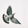 maria_ves: (birdy)