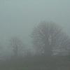 maria_ves: (Fog)