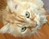 orangefur: (Farley)