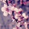 forest_zen: (blossom)