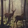 forest_zen: (deer)