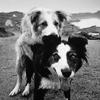 utflytter: (dogging)