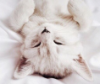tsunymo: (sleepy cat)