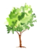 delfinnium: watercolour tree using wet-on-wet (painting)