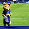 snailgecko: (Shrewsbury Town Lenny the Lion)
