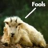 jamesq: (Fools)