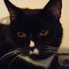 muninnhuginn: (mr socks, cats)