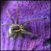 fioletovo_sero: (spider)