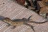 petmoosie: (nature, lizard)