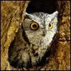 dt_maxwell: ([Animals] Owlie)
