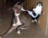 bkeulfulks: (Ninja Cat)