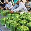lucianus: (melons)