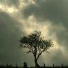 mutedtempest: (tree)