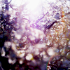 mewsing: Something shining through the trees (Default)