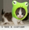llyrafantasyfae: (kitty costume)